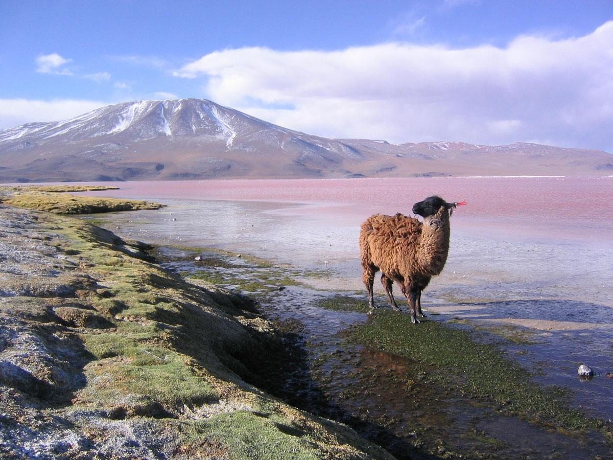 Bolivia-01