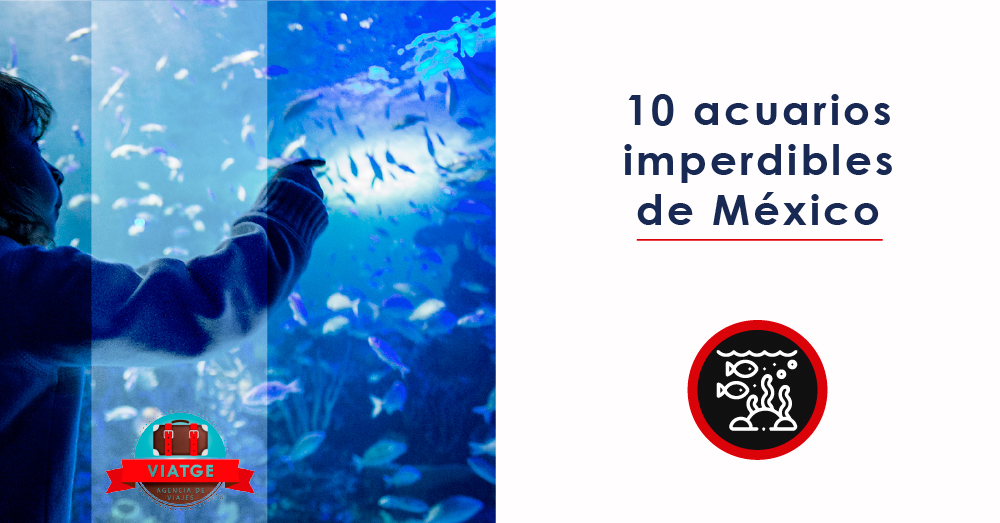 10 acuarios de México imperdibles