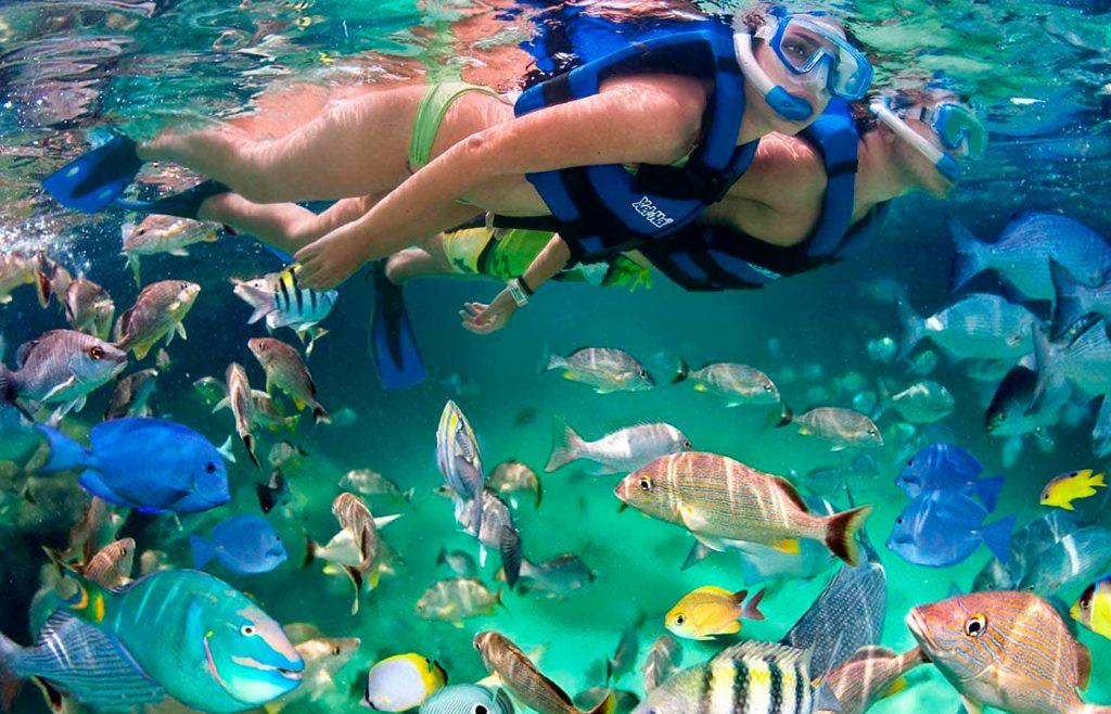 10 acuarios de Mexico imperdibles